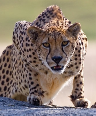 AFRICA ANIMAL FACTS