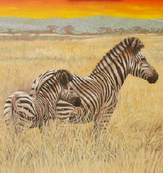African Zebras roaming the savanna